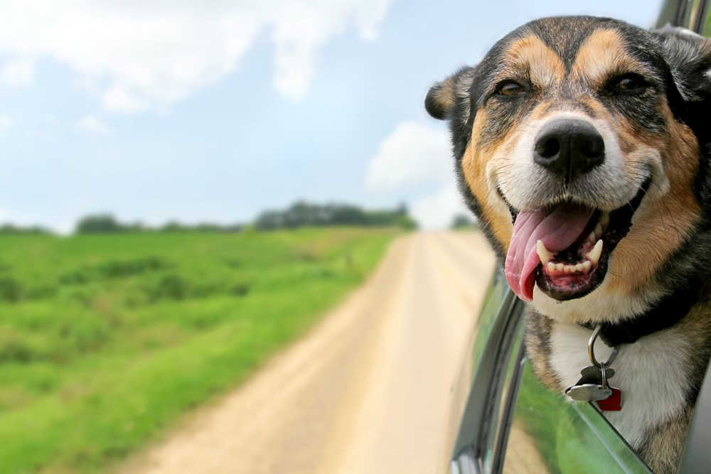 summer safety tips for dogs