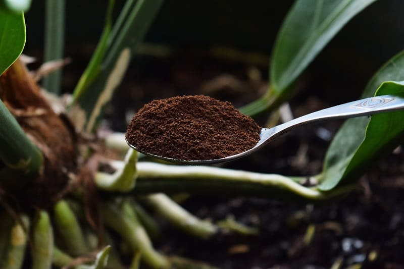 Coffee Grounds as a Fertilizer 2