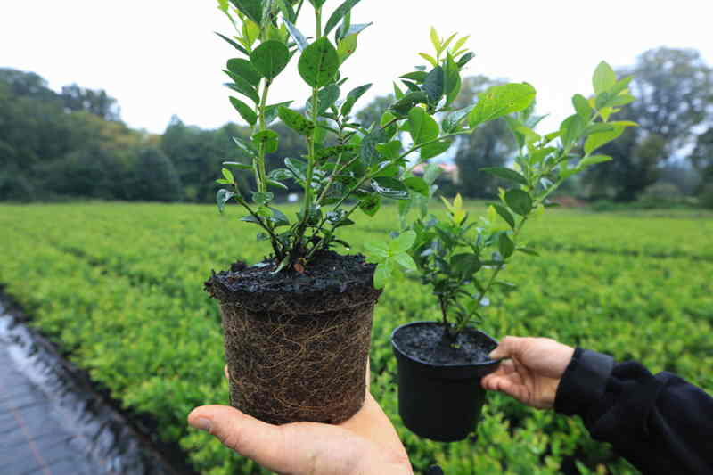 Coffee Grounds as a Pest Repellent