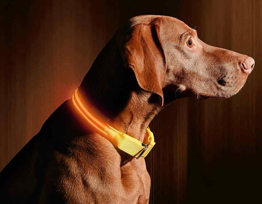 12. Illumiseen Light Dog Collar