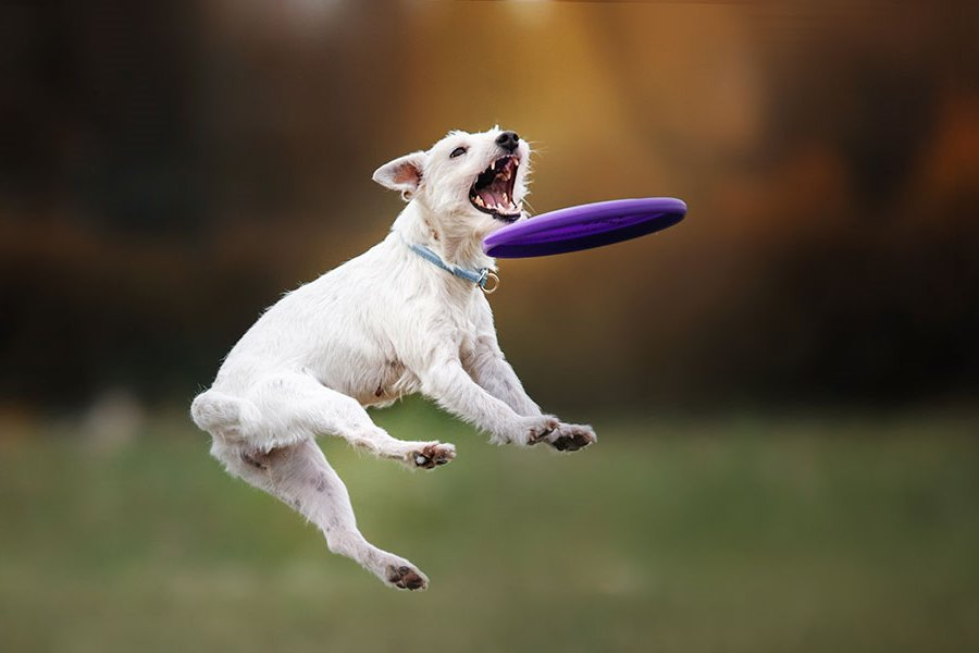 Keep Your Dogs Active
