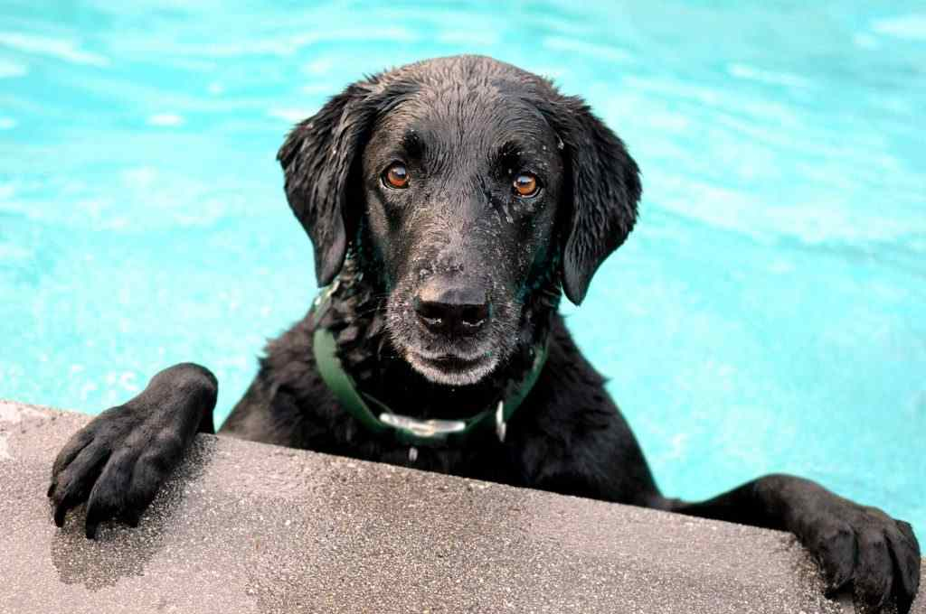 Keep Pets And People Safe In The Blistering Summer Heat