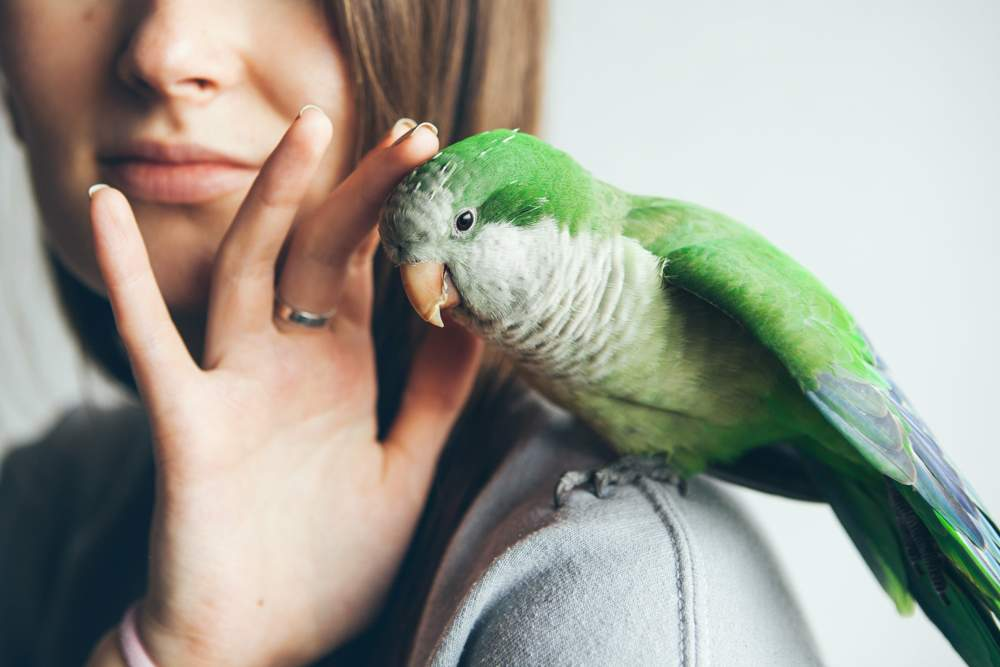 Travel With Your Bird